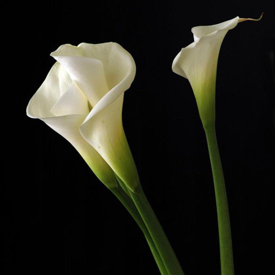 Jerri woolworth weddings wedding planner calla lily jerri calla lily izmirmasajfo